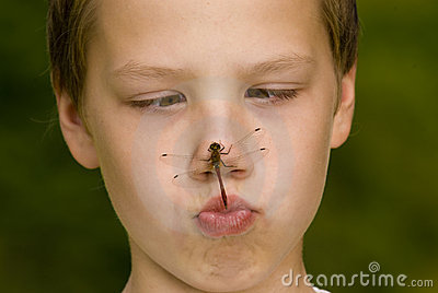 Insect on face