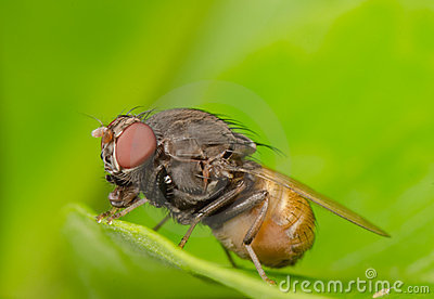 Insect fly on leaf