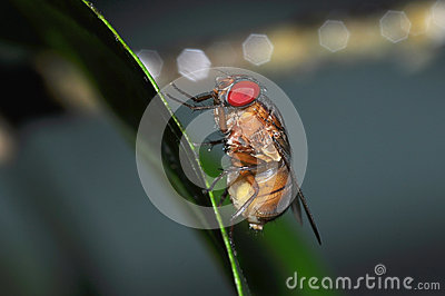 Insect fly macro