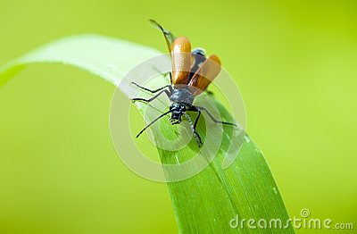 Insect on leaf