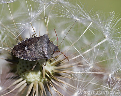 Insect Perched On Seeds Stock Photography - Image: 5441792