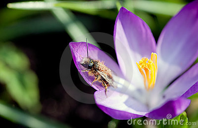 Insect in pollen