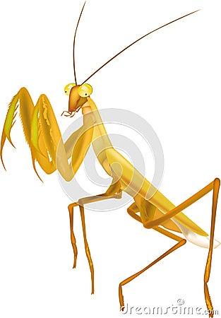 Free Insect Praying Mantis Stock Photos - 12950283