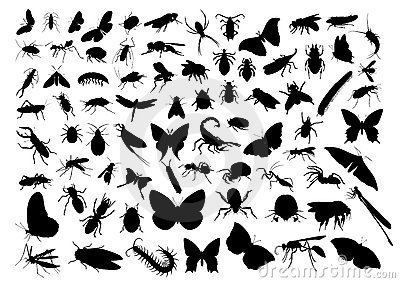 Insect silhouettes