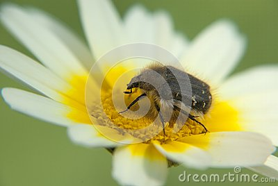 Insect on a wild flower
