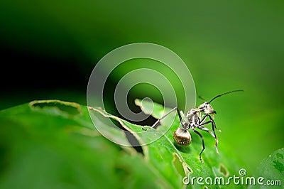 Insecte sur la lame verte