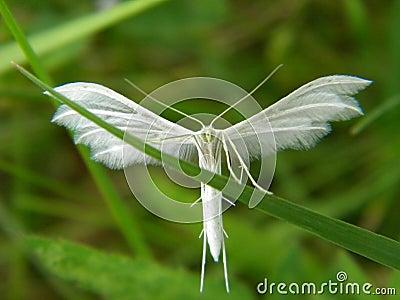 Insecto del ángel