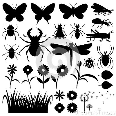 Free Insects And Flowers. Stock Image - 70868321