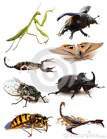Free Insects And Scorpions Royalty Free Stock Photos - 27811338