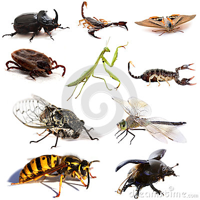 Free Insects And Scorpions Royalty Free Stock Photography - 33853257
