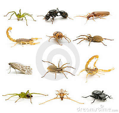 Insects and arachnids