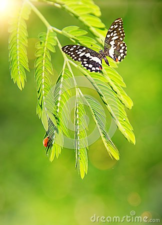 Insects on a green leaf