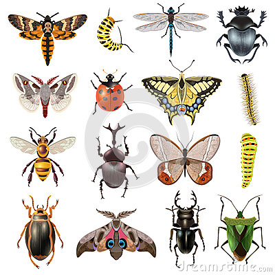 Free Insects Icons Set Stock Photos - 66197083