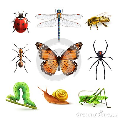 Free Insects Realistic Set Royalty Free Stock Photography - 49174567