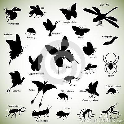 Free Insects Silhouettes Stock Photos - 36637153