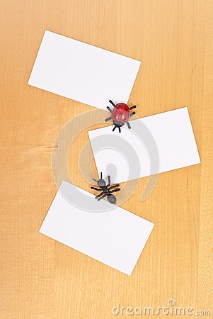 Insects And Three Blank Cards