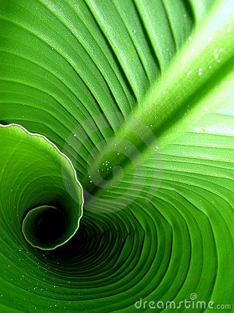 Free Inside A Banana Leaf Stock Photos - 5507613
