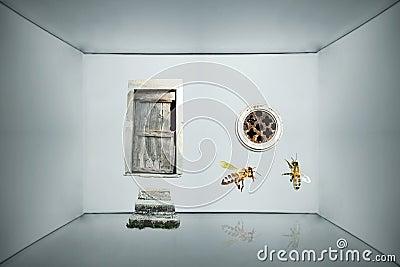 Inside a box