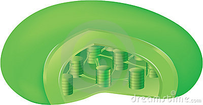 inside a chloroplast stock photos image 1024093. Black Bedroom Furniture Sets. Home Design Ideas