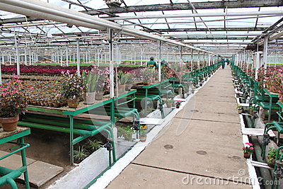 Inside the greenhouse Editorial Photo