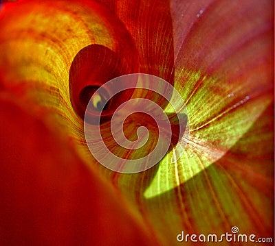 Inside Leaf