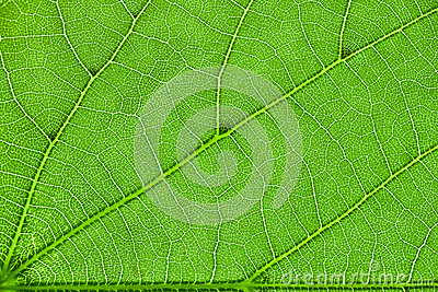 Inside of the leaf