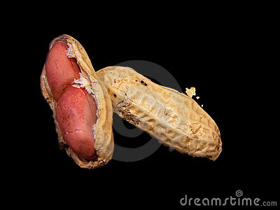 Inside peanut