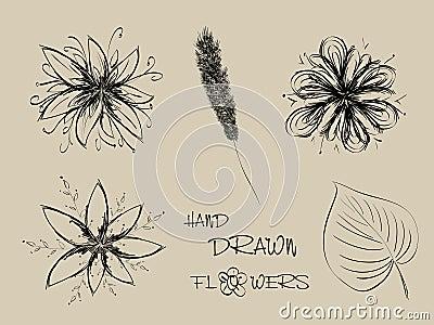 Insieme dei fiori disegnati a mano fotografia stock libera for Fiori disegnati