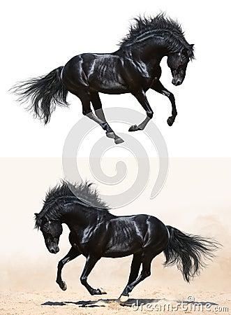 Insieme - stallion nero nel movimento