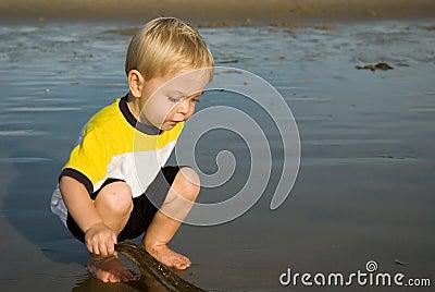 Inspecting seaweed