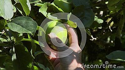 Inspection de la pomme dans l'arborescence clips vidéos