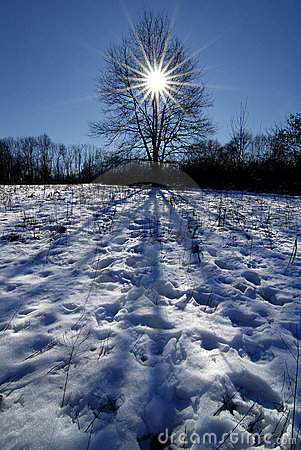 Inspiration s tree