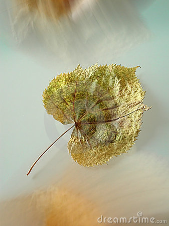 Inställd leaf
