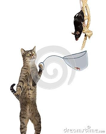Intelligent cat ratcatcher