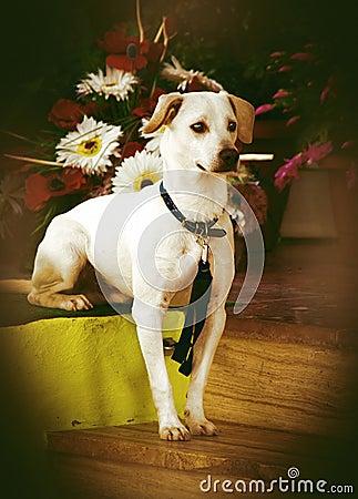 Free Intelligent Dog Royalty Free Stock Photos - 27740908