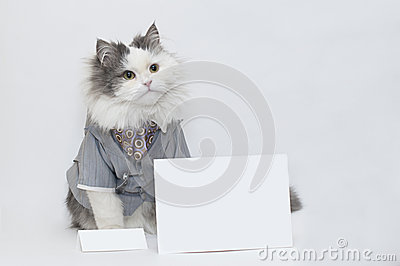 Intelligent katt