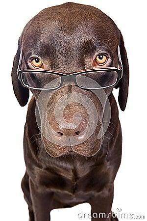 Intelligent Looking Dog