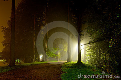Intense light shining through trees