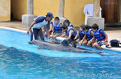 interacting with dolphins Editorial Stock Photo