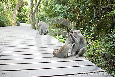 Interaction of monkey mother and son  grooming