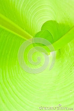 Interior leaf