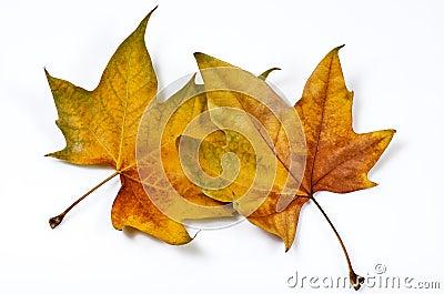 Interlaced leaves