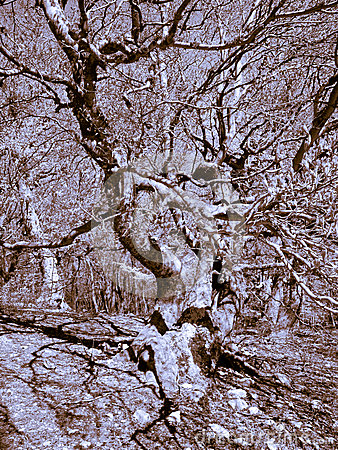 Interlacing branches