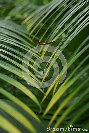 Interleaved palm leaves