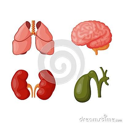 Internal organs vector illustration. Vector Illustration