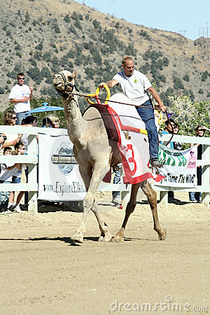 International Camel Races in Virginia City, NV, US Editorial Photography