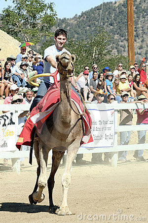 International Camel Races in Virginia City, NV, US Editorial Photo