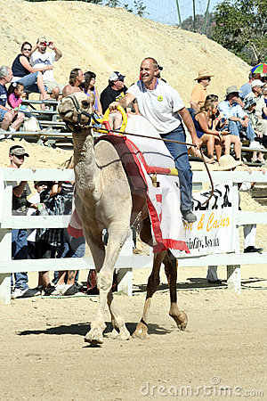 International Camel Races in Virginia City, NV, US Editorial Stock Image