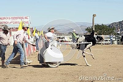International Camel Races in Virginia City, NV, US Editorial Image