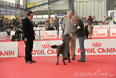 International dog show Editorial Image